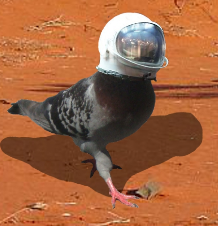 How pigeons learn self control